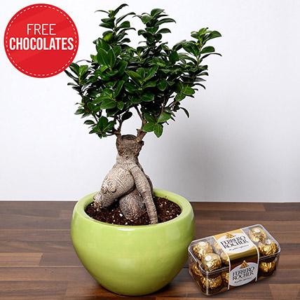Bonsai Plant and Free Chocolates: Bonsai Plants