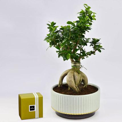 Bonsai Plant In Green Pot and Patchi Chocolates: Bonsai Plants