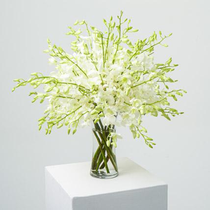 40 White Orchid Arrangement: Sympathy & Funeral Flowers