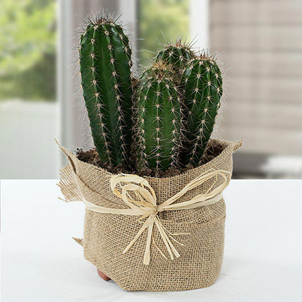 Cactus Jute Wrapped Potted Plant: Home Decor Items