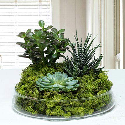 Small Glass Green Wonder: Cactus and Succulents Plants