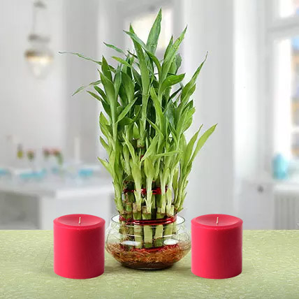 Three Layer Lucky Bamboo Plant N Candles: Lucky Bamboo Plants