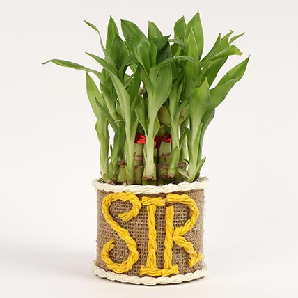 Elegant Lucky Bamboo For Sir: Gifts On Teacher's Day