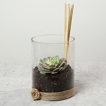 Green Echeveria in Clear Glass: Outdoor Plants