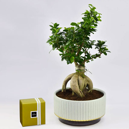 Bonsai Plant In Green Pot and Patchi Chocolates: Bonsai Plants