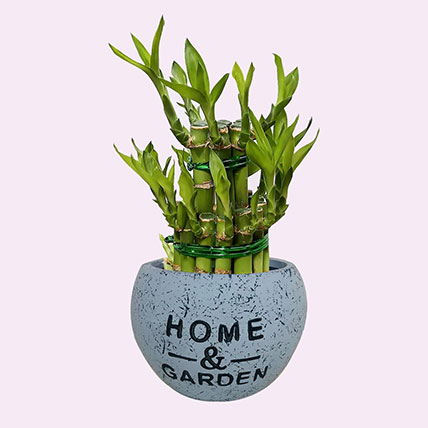 Bring Luck with 2 Layer Bamboo: Housewarming Plants