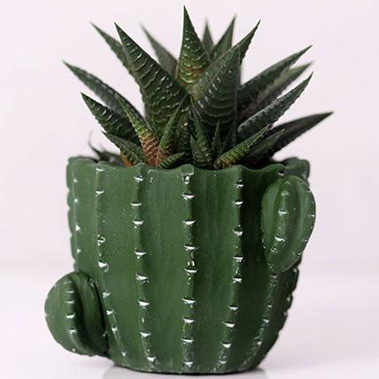 Gaster Haworthia in Cactus Design Pot: Desk Plants