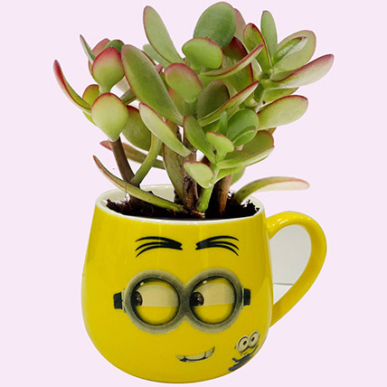 Smiley Pot of Crassula Plant: Plants for Birthday Gift