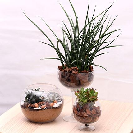 3 Beautiful Plant Arrangements: Dish Gardens
