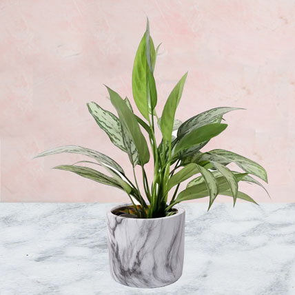 Aglaonema Plant in Pineapple Design Pot: Air Purifying Plants