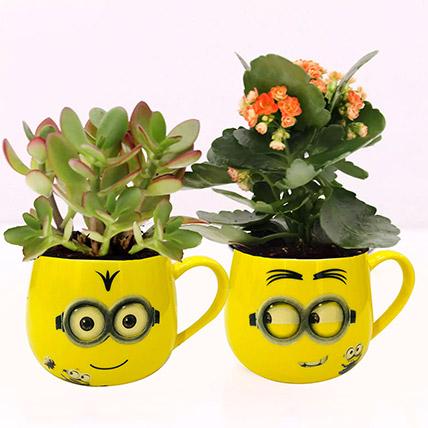Crassula and Kalanchoe Plants in Emoticon Mugs: Indoor Plants