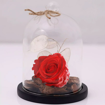 Red Forever Rose In Glass Dome: Bouquet of Roses