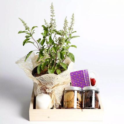 Sweet Diwali Hamper With Tulsi: Diwali Gifts