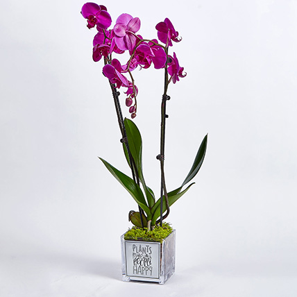 Happy Orchid Happy You: