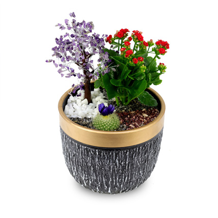 Wish Tree garden: Succulent Plants