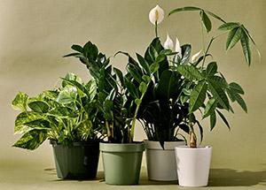 Best Indoor Plants to Keep for Good Health