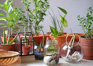 7 Best Household Plants According To Vastu