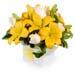 Bright Neutral Coloured Flower Box