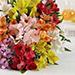 Rainbow Lily Bouquet